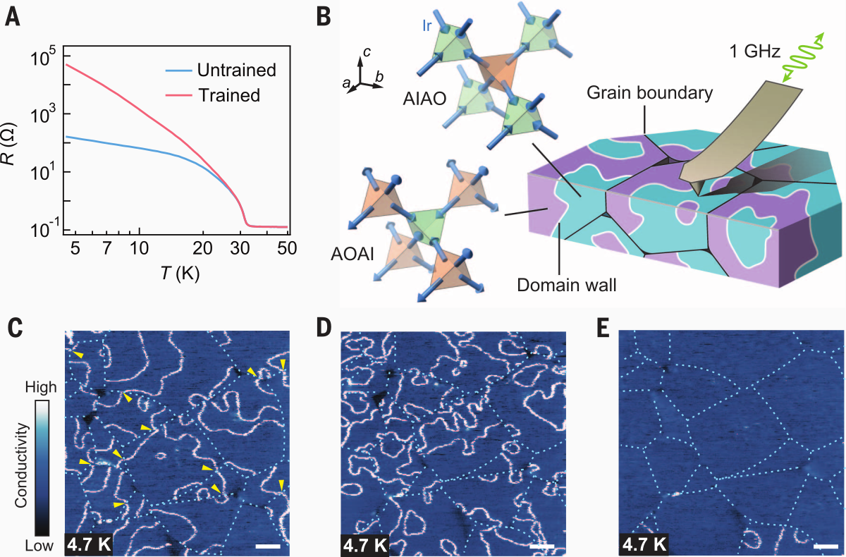 Conductive domain walls in Nd2Ir2O7 revealed by MIM.